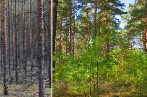 Ökologischer Waldumbau