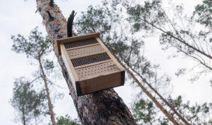 Bienen im Wald