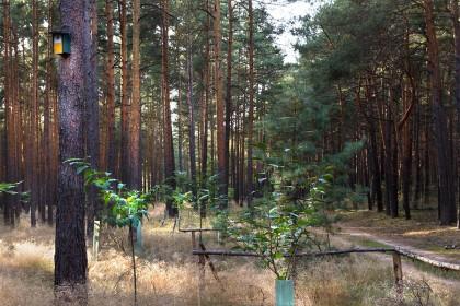 Waldrandgestaltung