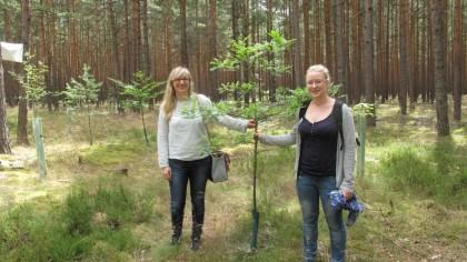 Die gespendeten Bäumchen entwickeln sich gut, wie sich Claudia Stottko (links) und Heike Williams (rechts) aus Berlin im Sommer 2016 überzeugen konnten. Foto: R. Benthin